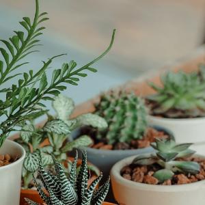 PLANTS, BULBS & SUCCULENTS